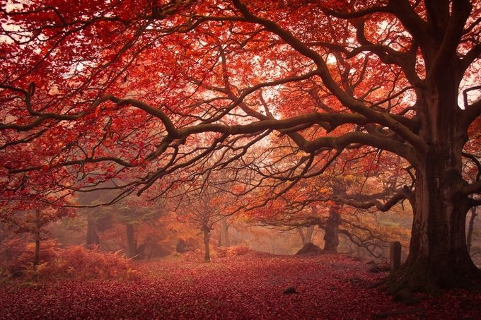 Autumn Walk by StuartLilleyPhotography - It Is Red Photo Contest