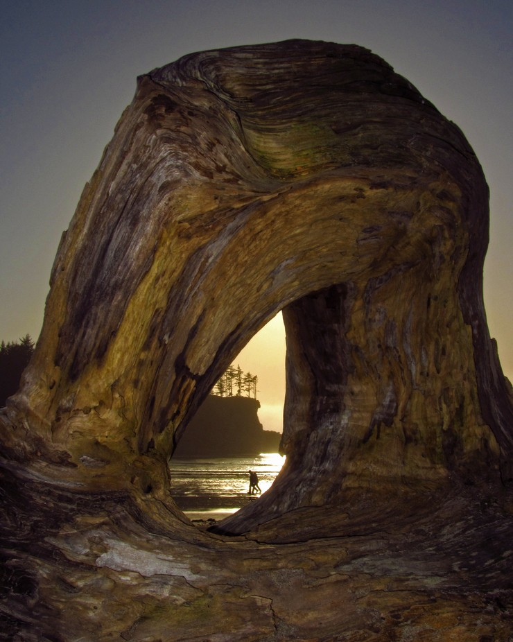 Driftwood Arch by debbietegtmeier - Clever Angles Photo Contest