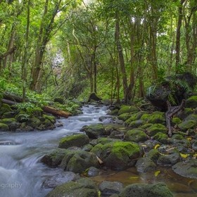 Stream in the Jungle