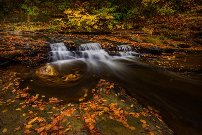 Swirls of Autumn
