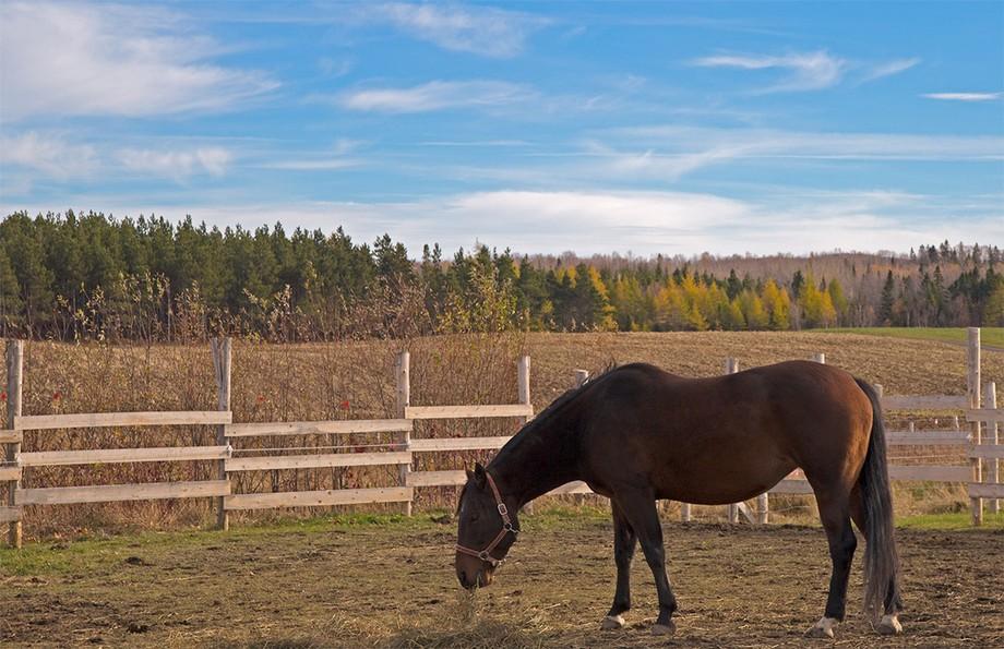 cheval-carole