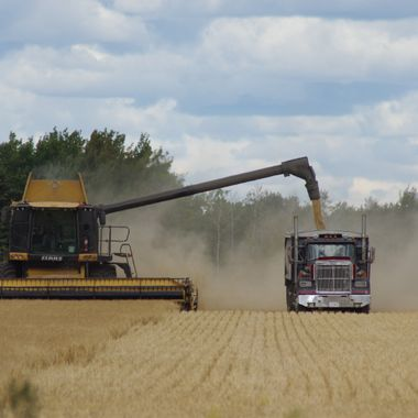 Canadian Harvest in full swing.