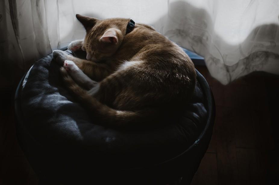 Relaxing little heisenberg