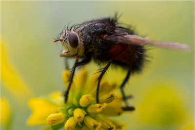 Bee_On_Wingstem
