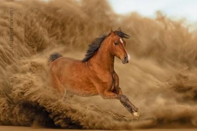 wild arabian