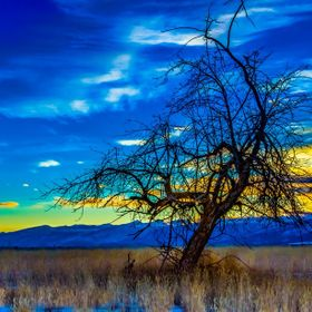 I found this nearly dead apple tree near the end of a dirt road in the hills of Montana. I had just turned the car around and bam! there was the ...