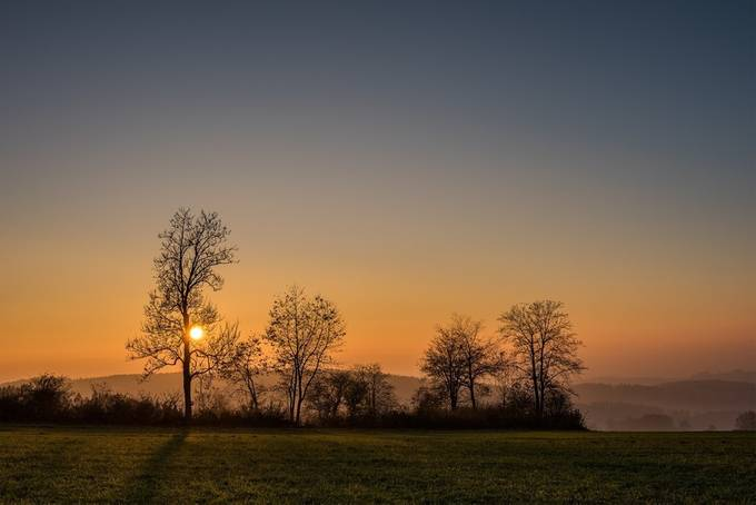 Golden Sunset by petrabischoff - Silhouettes Of Trees Photo Contest