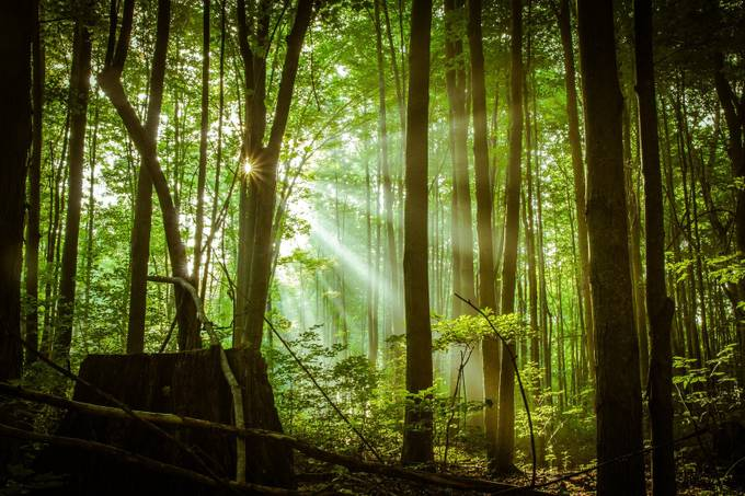 Let There Be Light by floraehrlich - Flares 101 Photo Contest
