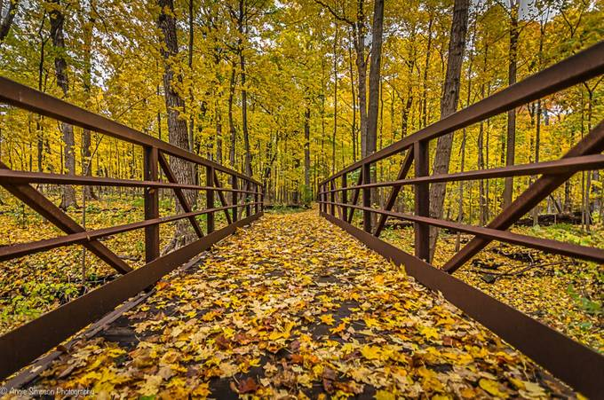 Bridge in the Forest by angiesimpson - Divine Forests Photo Contest