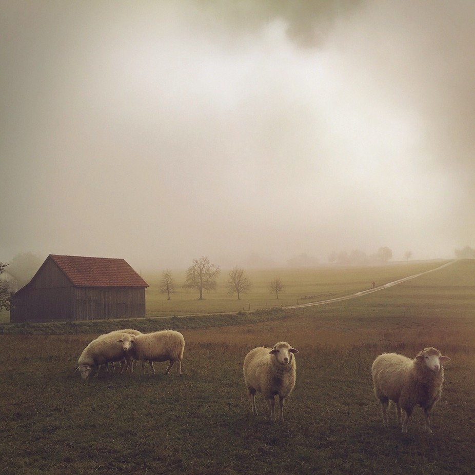 Out of the Mist by Mariko - Farms And Barns Animals Photo Contest