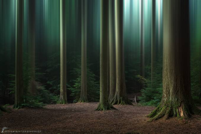 Blurry Forest by artursomerset - Divine Forests Photo Contest