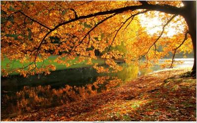 Autumn colours - unedited shot