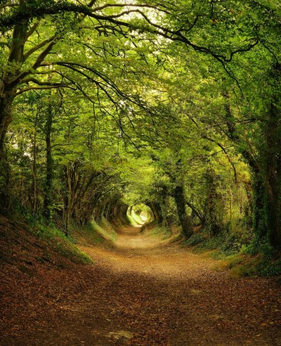 Nature's Tunnel