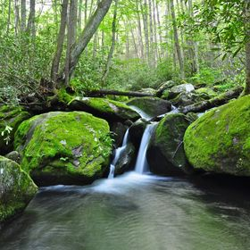 This waterfall is small, but very pretty. It is a little over a mile up Jake's Creek Trail from the Elkmont Campground.