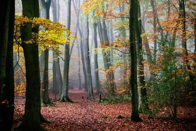 DSC_0193-Edit by pnewbery - Tall Trees Photo Contest