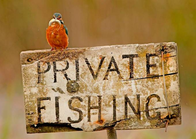 "Kingfisher ""Illegal Activity"" by ronmccombe - Billboards And Other Signs Photo Contest"