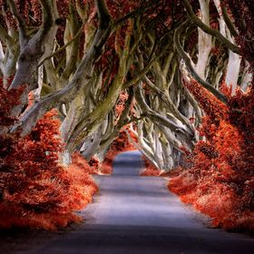'The King's Road overrunneth with blood'... https://www.facebook.com/22over7.FineArtPhotography (All images available for sale/pri...