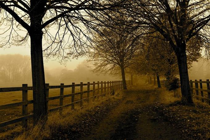 Fog; trees and path by YvonneJeaK - Fences Photo Contest