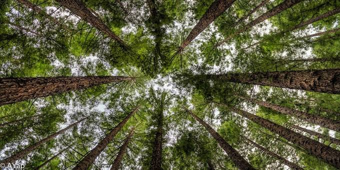 RedForest by anthonyyap - Skywards Photo Contest
