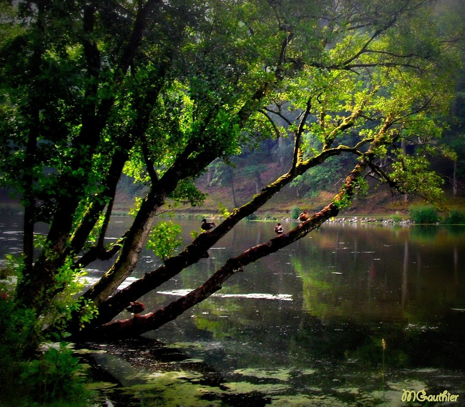 Beautifum park in Chevetogne, Belgium, is a wonderful place where to spend the day with family an...