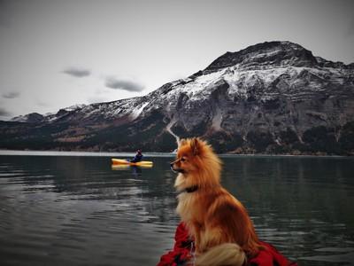 kayaking dog on watch