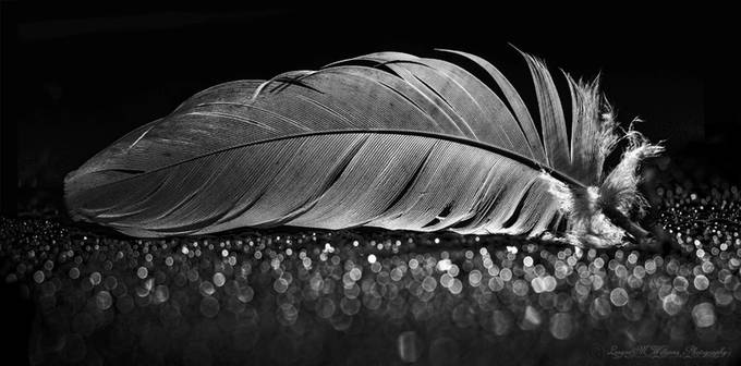 Black and white feather by LeanneMWilliams - Black And White Wow Factor Photo Contest