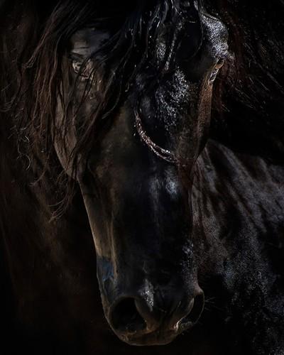The Dark Horse Art 11