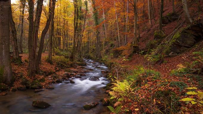 Bistrica stream gorge I. by daniturphoto - Streams In Nature Photo Contest