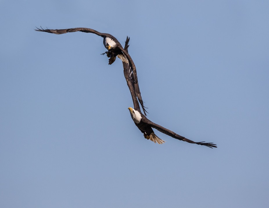 eagles two