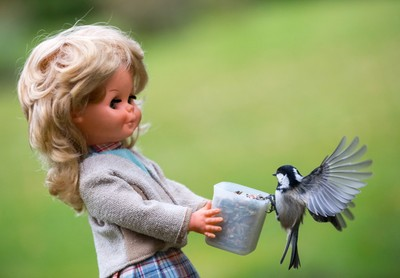 Doll and Coal Tit