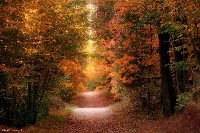 Autumn Walk by DebbieSummers - Fall 2016 Photo Contest