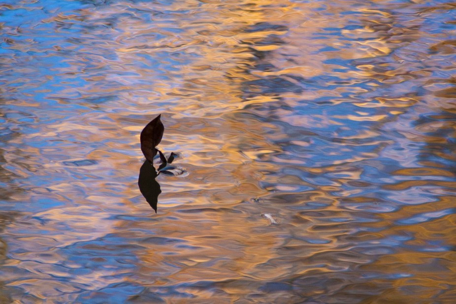 Floating Leaf and reflection