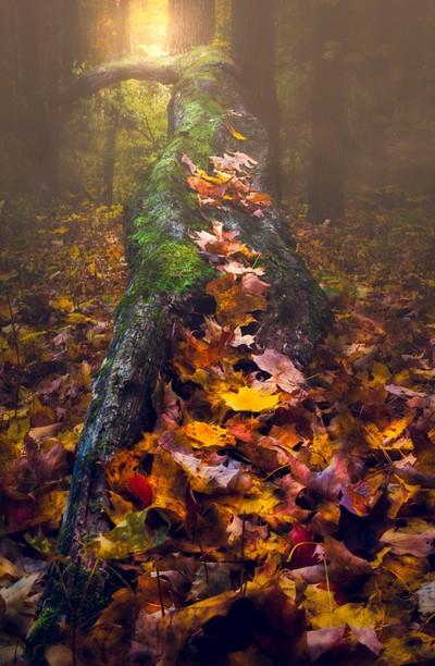 Iets anders dan ik. Ik wilde de herfstkleuren vastleggen en wat focus stacking doen. Dit leek twee vliegen in één klap te slaan : door Theo-Herbots-Fotograaf