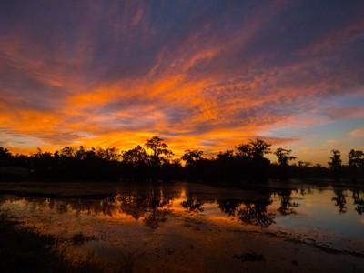 Cajun Dawn Color Explosion