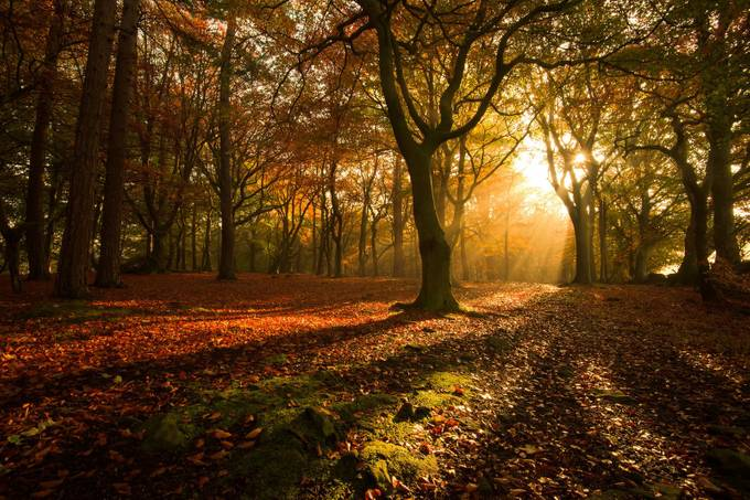 Netherton-woods by danhowarthphotography - Divine Forests Photo Contest