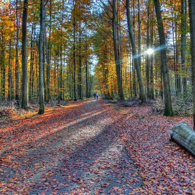 Forest de Soigne in Belgium