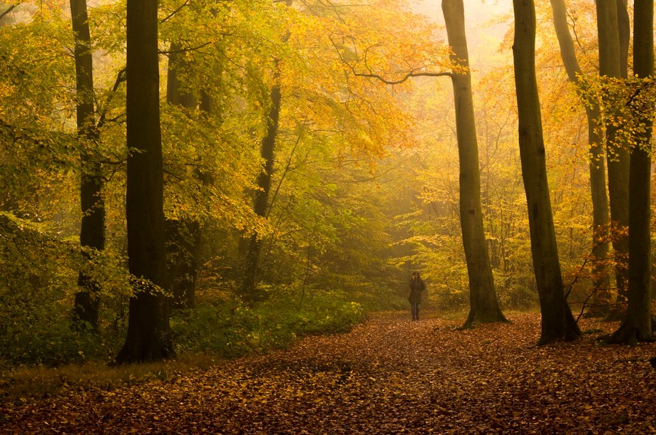 A Frame of Gold 2  The colors of September are intense and humbling; and if you venture into the ...