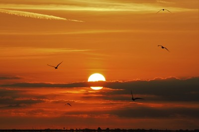 Seagulls at sunrise