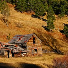 abandoned homestead