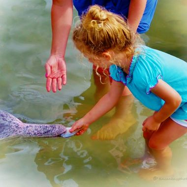 Family interaction with the dolphin feeding at Tin Can Bay, SE Queensland, Australia (2)