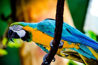 Macaw from Below