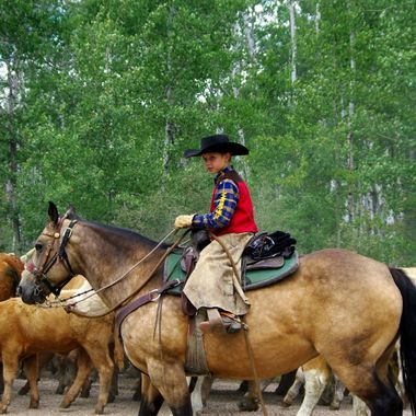 Rounding up the horses.
