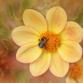 A bee looking for food and a beautiful yellow flower by Deborah Berry