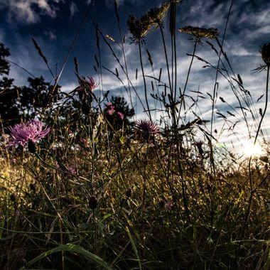 Big Meadow, Shenandoah National Park