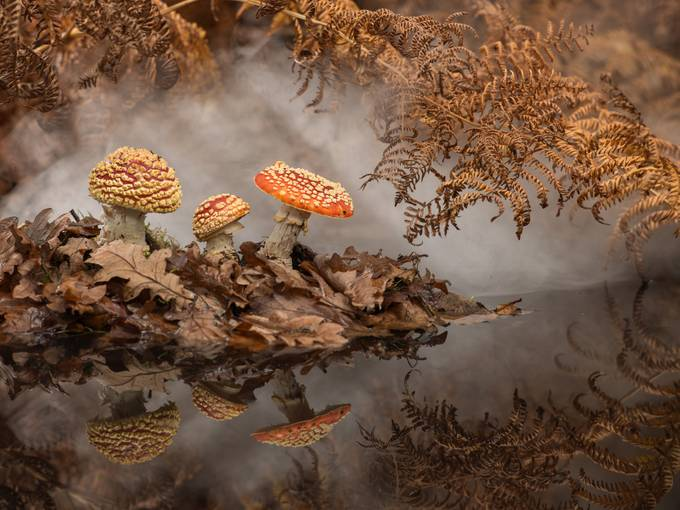 Fly Agaric by mikehudson_4920 - Fall 2016 Photo Contest