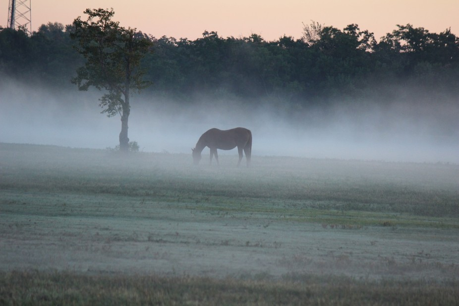 Horse in the fog