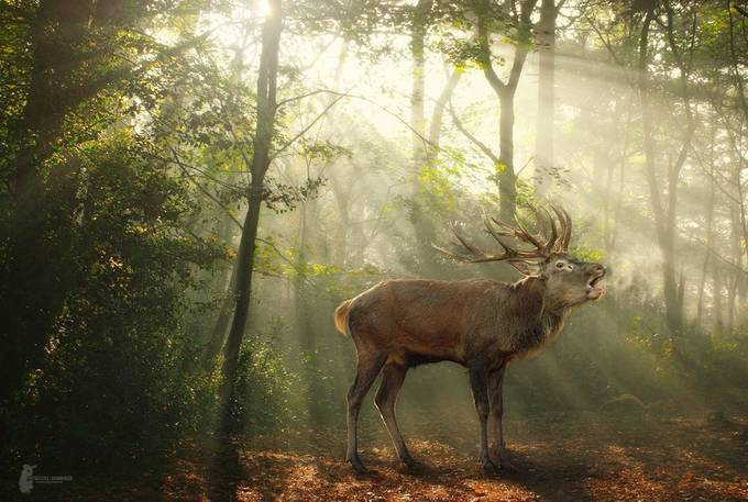 Deer in the morning light by Fotostyle-Schindler - Playing With Light Photo Contest