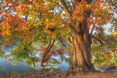 tree1bps