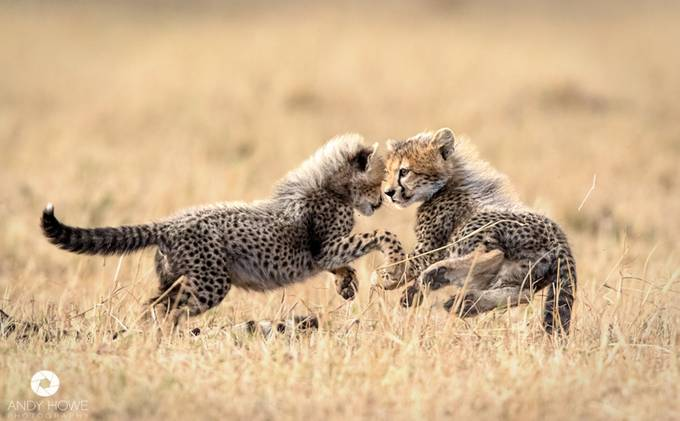 Play time by AndyHowePhotography