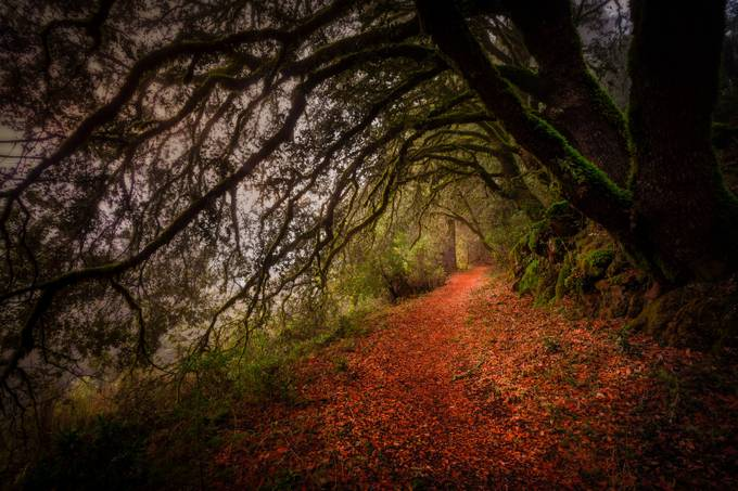 Life's Path by diversionphotography - Celebrating Nature Photo Contest Vol 3